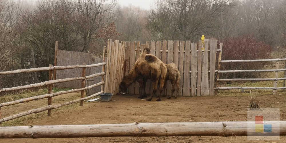 Zoo Zajezd | Kamel