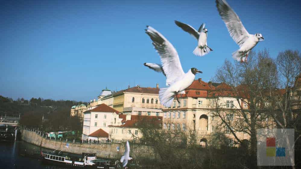 Möwen | Die Moldau