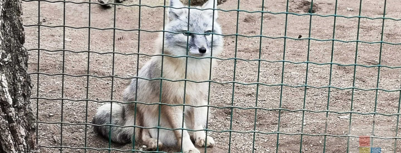Zoo Zajezd | Korsak