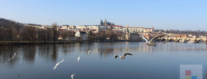 Die Moldau | Praager Burg | Karlsbrücke | Vögel